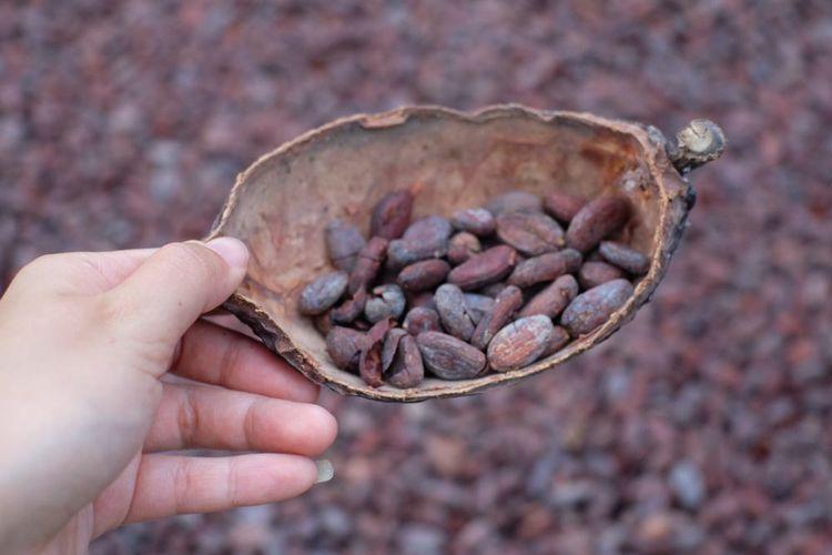Apakah Coklat Termasuk Makanan Sehat